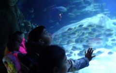 Child of the term - London Aquarium